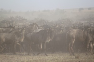 great-migration-1021455_640