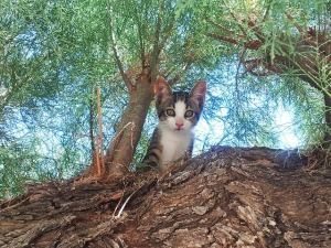cat-352034_640