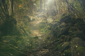forest-438432_640